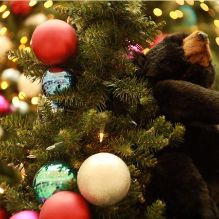Quand la science s'invite aux fêtes de Noël